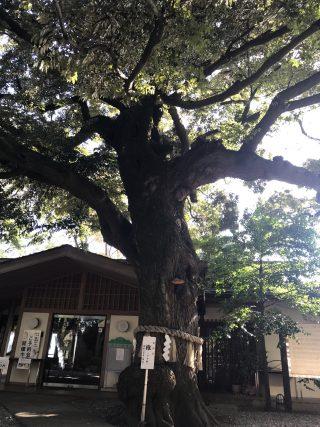 座間神社 (33)